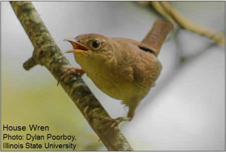 Evolutionary, Physiological, and Behavioral Ecology of Birds